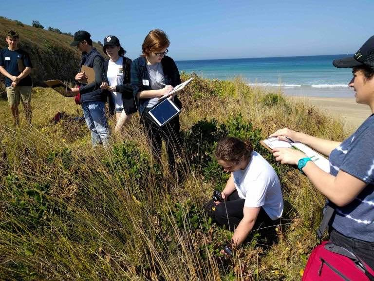 several students with workbooks conducting fieldwork investigations in the foredunes at Warilla Beach