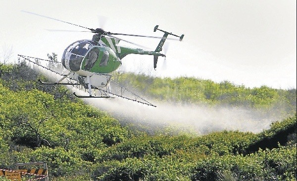 helicopter spraying herbicide over dunes covered in dark green bitou bush weed